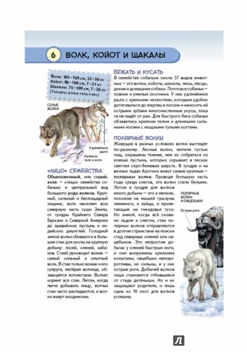 Иллюстрация 1 из 39 для Хищные животные. Опасные, дикие, домашние - Юлия Школьник | Лабиринт - книги. Источник: Лабиринт