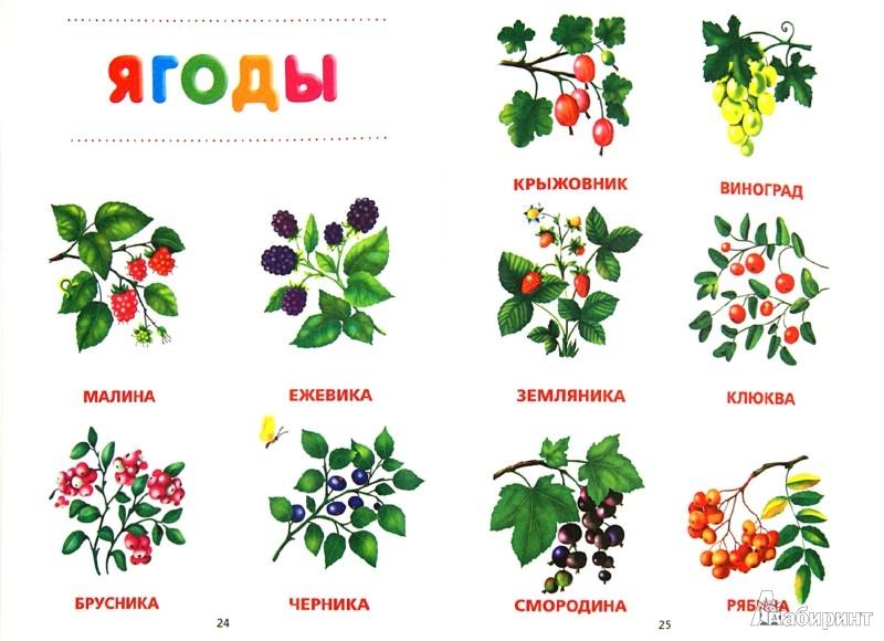 Иллюстрация 1 из 12 для Моя первая книжка-картинка. Рисуем, играем, запоминаем | Лабиринт - книги. Источник: Лабиринт