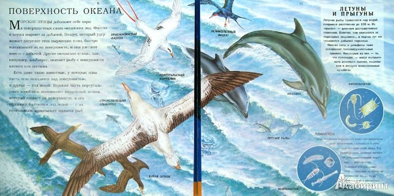 Иллюстрация 1 из 7 для Океан - Николас Харрис | Лабиринт - книги. Источник: Лабиринт