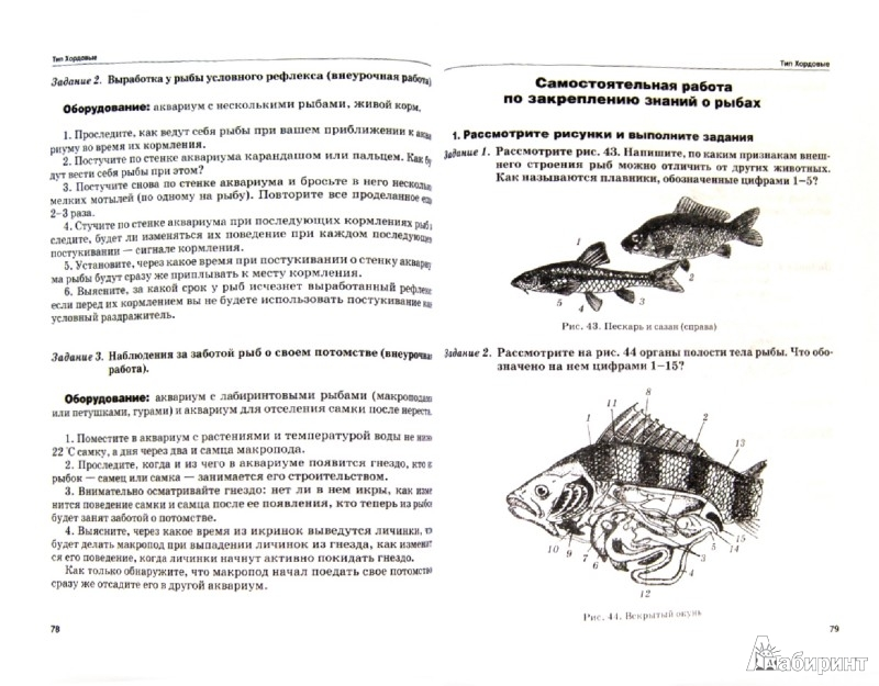 Иллюстрация 1 из 11 для Биология. 8 класс. Животные. Практические занятия - Александр Никишов | Лабиринт - книги. Источник: Лабиринт