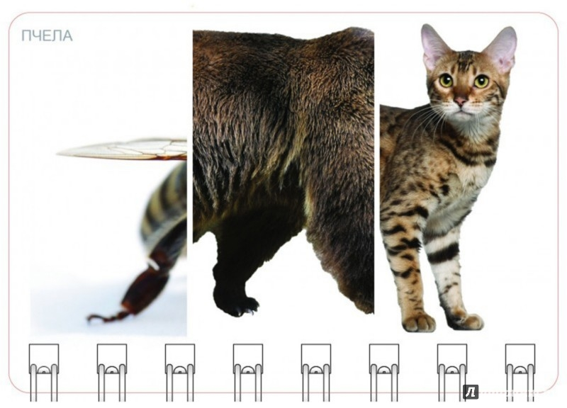 Иллюстрация 1 из 8 для Собираем животных. 3-10 лет. Большой блокнот | Лабиринт - книги. Источник: Лабиринт
