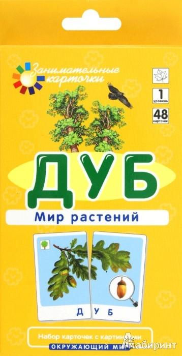 Иллюстрация 1 из 5 для Дуб. Мир растений - Е. Гончарова   Лабиринт - книги. Источник: Лабиринт