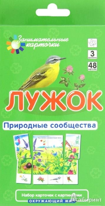 Иллюстрация 1 из 4 для Лужок. Природные сообщества - Е. Гончарова | Лабиринт - книги. Источник: Лабиринт