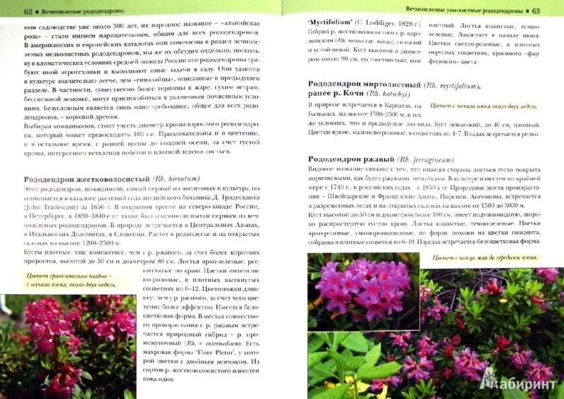 Иллюстрация 1 из 27 для Рододендроны - Светлана Воронина   Лабиринт - книги. Источник: Лабиринт