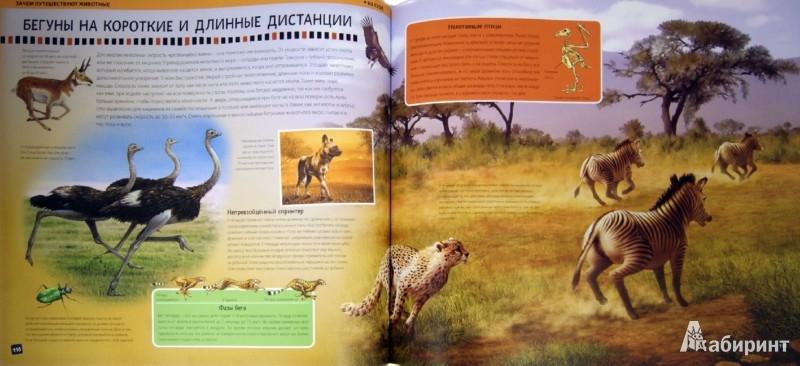 Иллюстрация 1 из 10 для Большая энциклопедия животных 3D - Баголи, Шел | Лабиринт - книги. Источник: Лабиринт