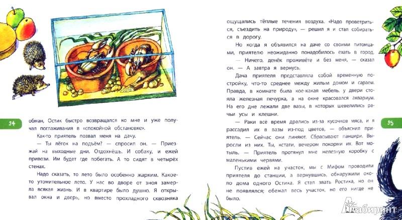 Иллюстрация 1 из 7 для Зоопарк в моей квартире: рассказы о домашних питомцах | Лабиринт - книги. Источник: Лабиринт