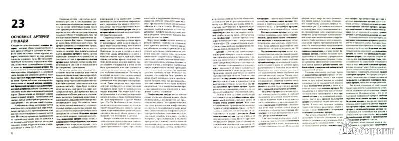 Иллюстрация 1 из 8 для Топографическая анатомия лошади - Питер Гуди   Лабиринт - книги. Источник: Лабиринт