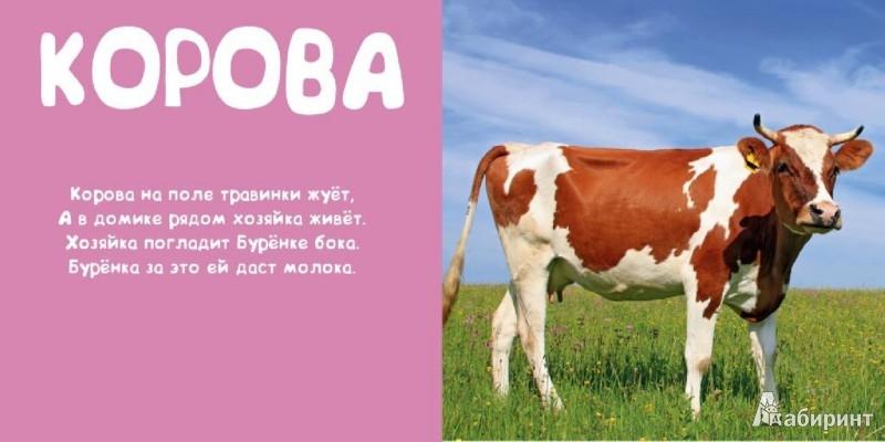 Иллюстрация 1 из 4 для Мои животные - Леонид Фадеев   Лабиринт - книги. Источник: Лабиринт