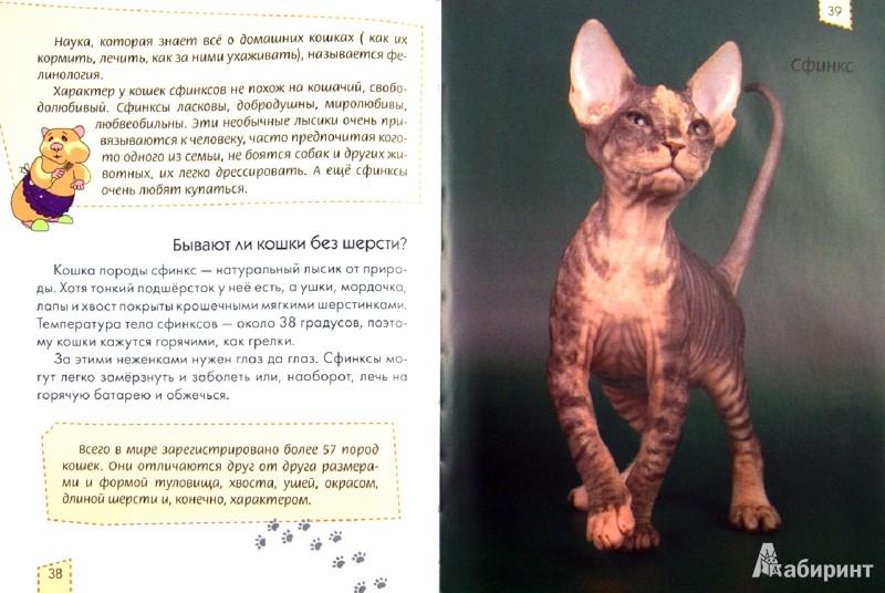 Иллюстрация 1 из 4 для Домашние любимцы - Анна Тетельман   Лабиринт - книги. Источник: Лабиринт