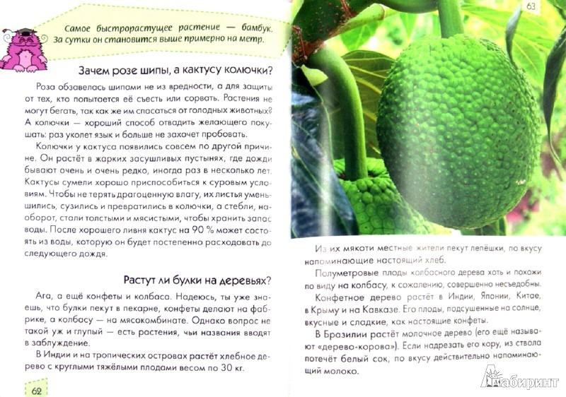 Иллюстрация 1 из 12 для Любопытным носикам ответы на вопросики - Юлия Блоха | Лабиринт - книги. Источник: Лабиринт