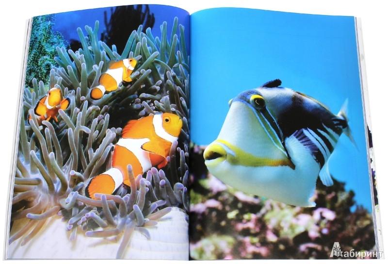 Иллюстрация 1 из 31 для Мир моря - Эмма Сэл | Лабиринт - книги. Источник: Лабиринт