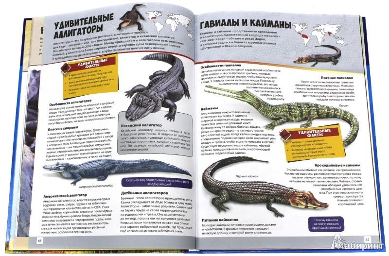 Иллюстрация 1 из 9 для Животные. Энциклопедия для мальчиков и девочек | Лабиринт - книги. Источник: Лабиринт