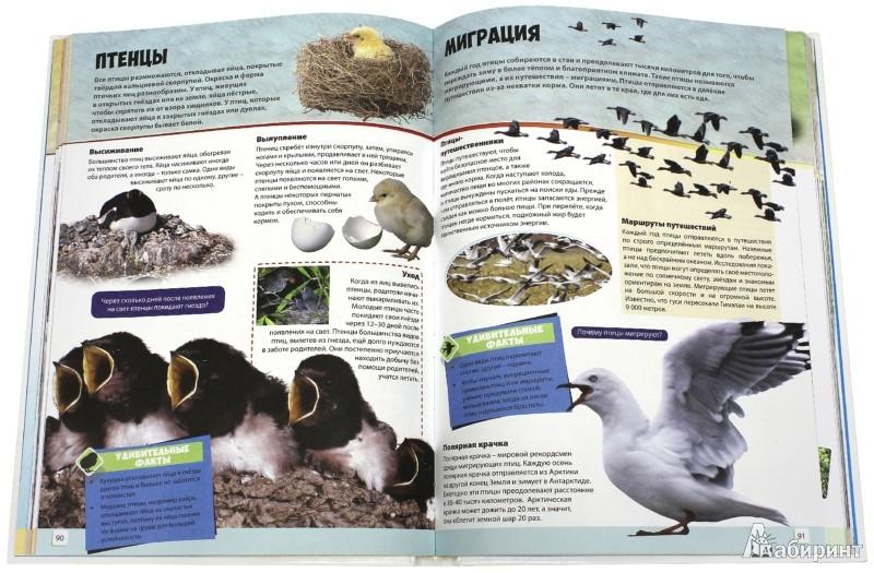Иллюстрация 1 из 21 для Большая книга животного мира | Лабиринт - книги. Источник: Лабиринт