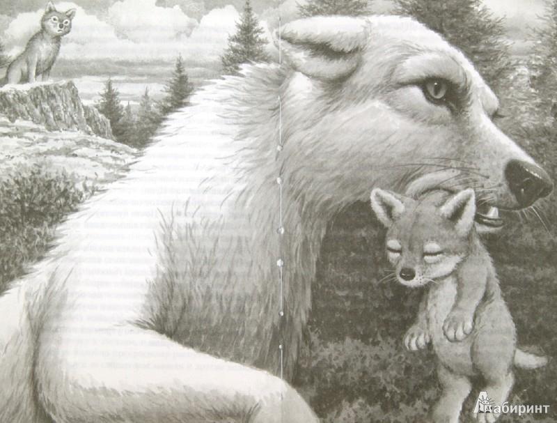 Иллюстрация 1 из 9 для Тень - Кэтрин Ласки | Лабиринт - книги. Источник: Лабиринт