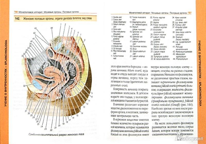 Иллюстрация 1 из 5 для Атлас анатомии человека - Владимир Воробьев | Лабиринт - книги. Источник: Лабиринт