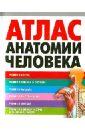 Воробьев Владимир Петрович Атлас анатомии человека атлас нормальной анатомии человека