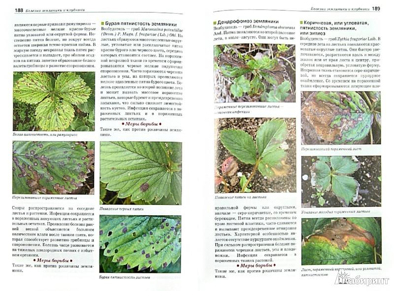 Иллюстрация 1 из 33 для Болезни и вредители плодовых растений. Атлас-определитель - Трейвас, Каштанова | Лабиринт - книги. Источник: Лабиринт