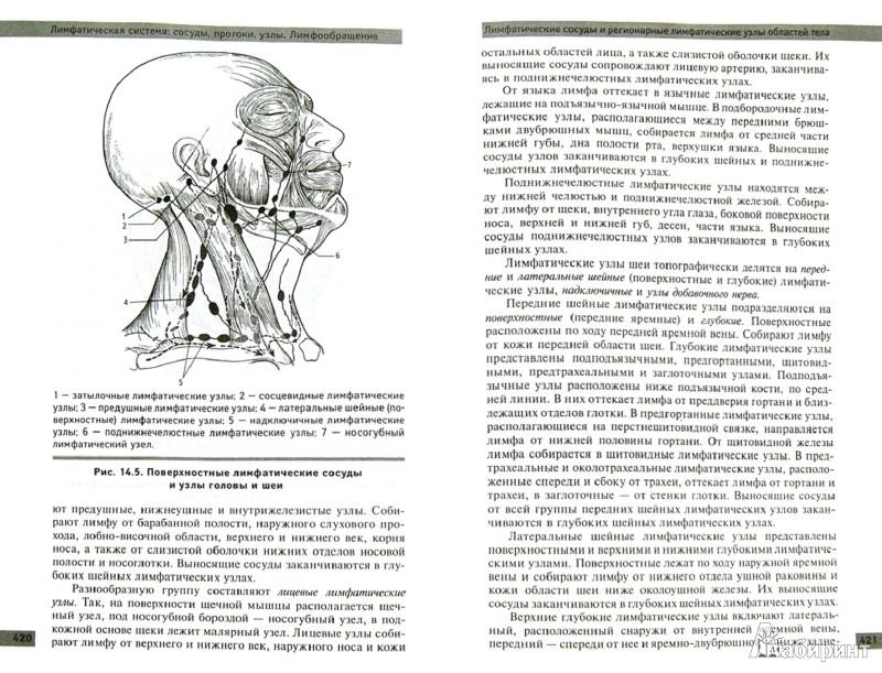 Иллюстрация 1 из 7 для Анатомия и физиология человека: учебное пособие - Самусев, Сентябрев | Лабиринт - книги. Источник: Лабиринт