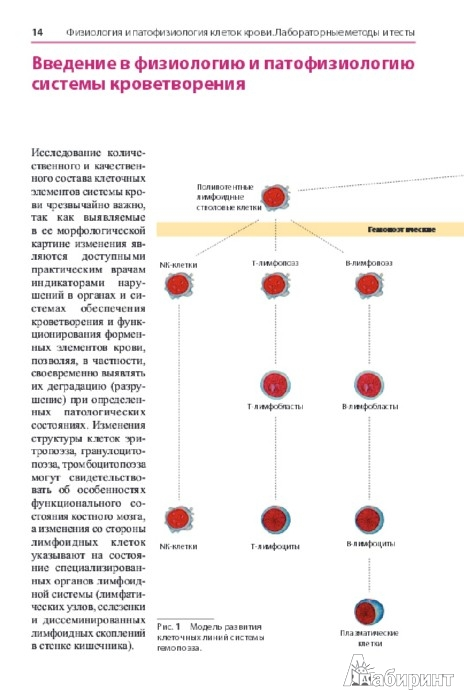 Иллюстрация 1 из 16 для Атлас по гематологии - Тэмл, Диам, Хаверлах | Лабиринт - книги. Источник: Лабиринт
