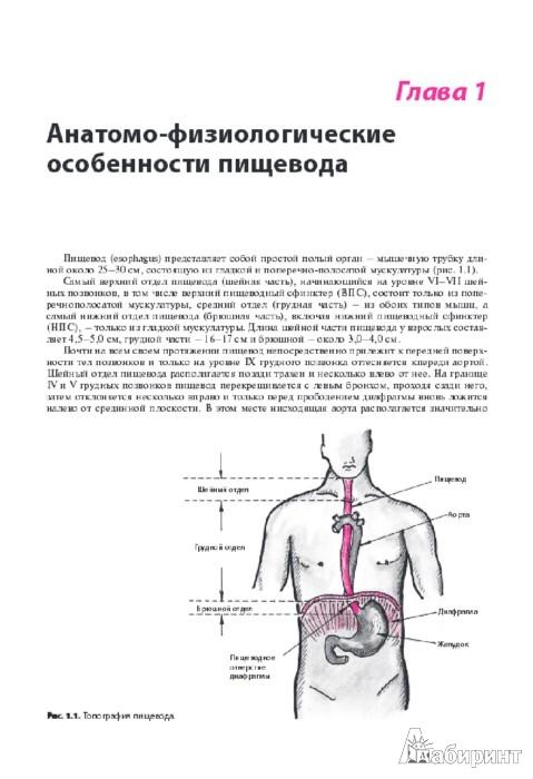 Иллюстрация 1 из 21 для Внутренние болезни. Система органов пищеварения - Струтынский, Ройтберг   Лабиринт - книги. Источник: Лабиринт