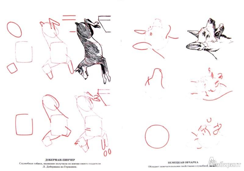 Иллюстрация 1 из 14 для Рисуем 50 собак - Ли Эймис | Лабиринт - книги. Источник: Лабиринт