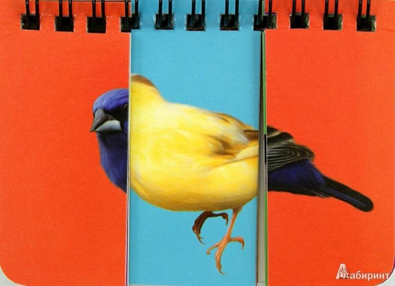 Иллюстрация 1 из 6 для Птицы. Собери картинку | Лабиринт - книги. Источник: Лабиринт