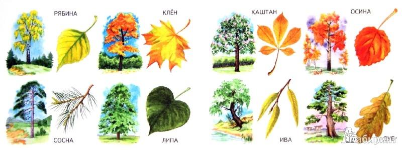 Иллюстрация 1 из 31 для Листья | Лабиринт - книги. Источник: Лабиринт