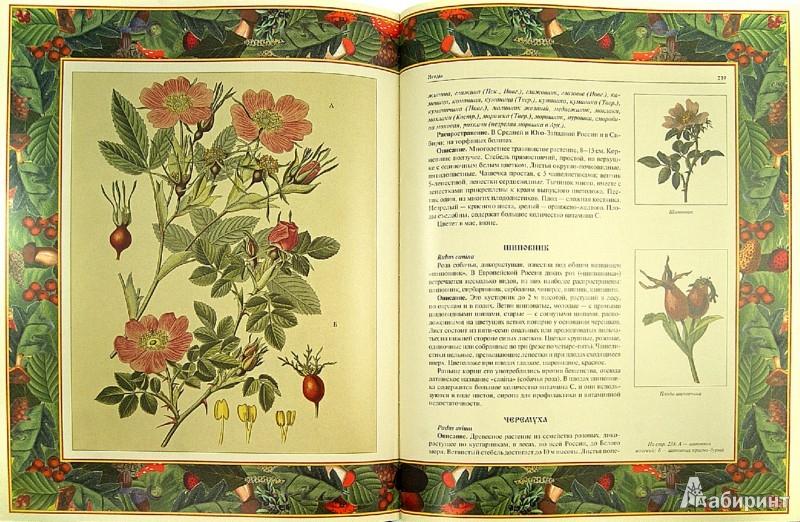 Иллюстрация 1 из 8 для Русский лес. Грибы и ягоды (в футляре) | Лабиринт - книги. Источник: Лабиринт