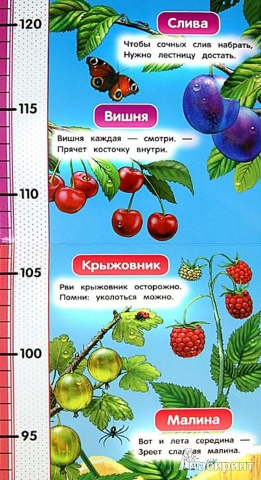 Иллюстрация 1 из 3 для Овощи и фрукты - Софья Буланова | Лабиринт - книги. Источник: Лабиринт