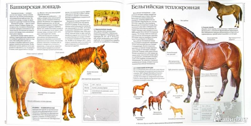 Иллюстрация 1 из 22 для Лошади и пони - Владимир Жабцев | Лабиринт - книги. Источник: Лабиринт