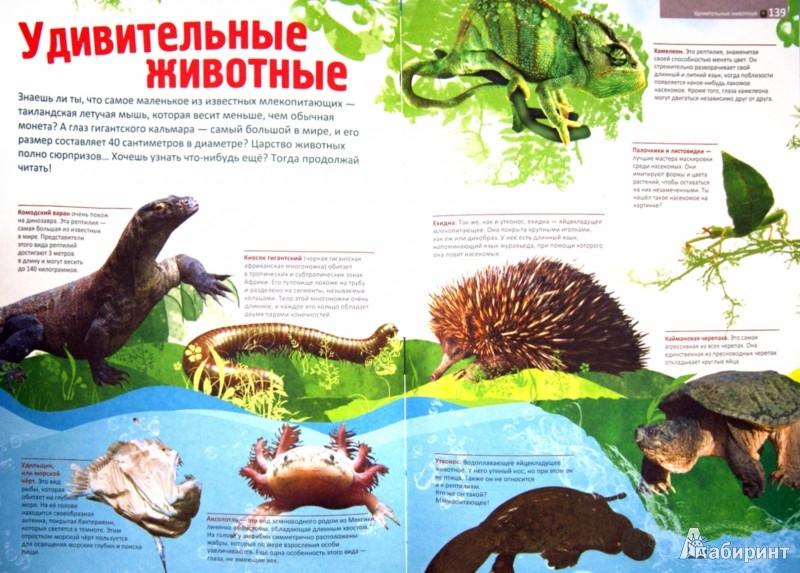 Иллюстрация 1 из 11 для Мир животных | Лабиринт - книги. Источник: Лабиринт