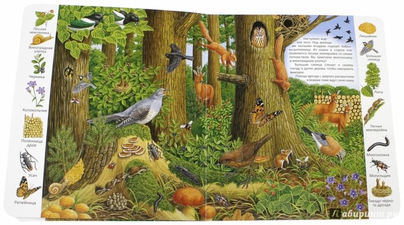 Иллюстрация 1 из 24 для В лесу | Лабиринт - книги. Источник: Лабиринт
