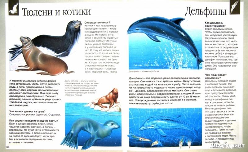 Иллюстрация 1 из 49 для Животные - Букобза, Мулинье | Лабиринт - книги. Источник: Лабиринт