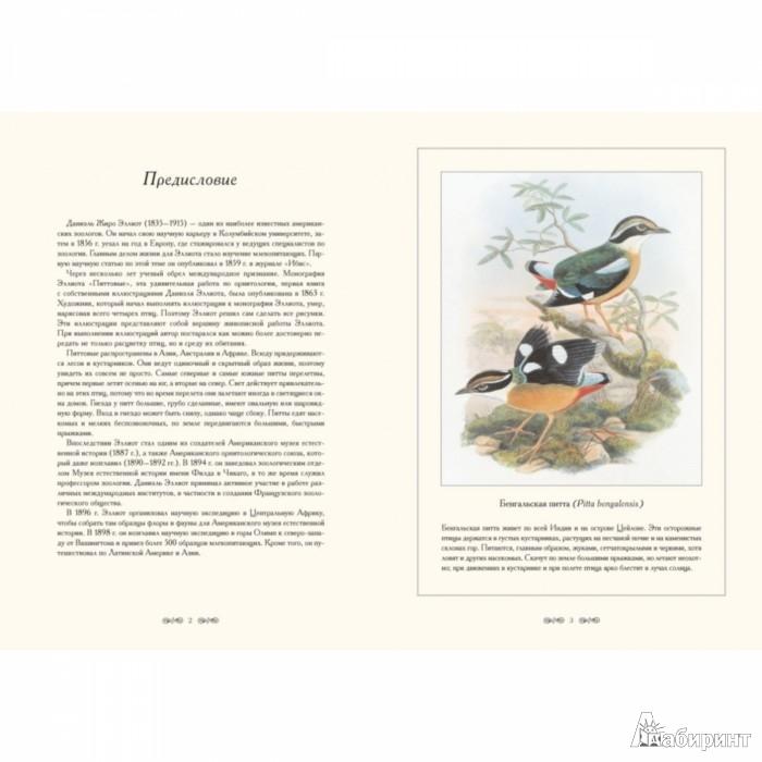 Иллюстрация 1 из 10 для Питтовые. Иллюстрации Д.-Ж. Эллиота - Даниэль Эллиот | Лабиринт - книги. Источник: Лабиринт