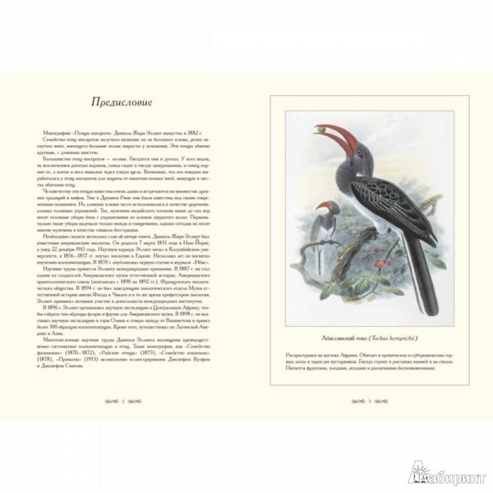 Иллюстрация 1 из 10 для Птицы-носороги. Иллюстрации Д.-Ж. Эллиота - Даниэль Эллиот   Лабиринт - книги. Источник: Лабиринт