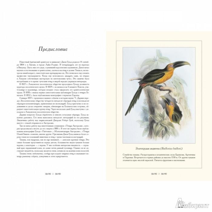 Иллюстрация 1 из 7 для Туканы. Иллюстрации Дж. Гульда - Джон Гульд | Лабиринт - книги. Источник: Лабиринт
