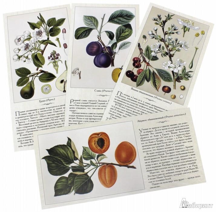 Иллюстрация 1 из 10 для Фрукты и ягоды | Лабиринт - книги. Источник: Лабиринт