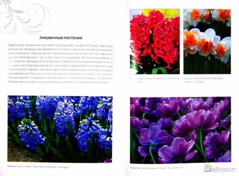 Иллюстрация 1 из 38 для Миллион растений для вашего сада - Галина Кизима   Лабиринт - книги. Источник: Лабиринт