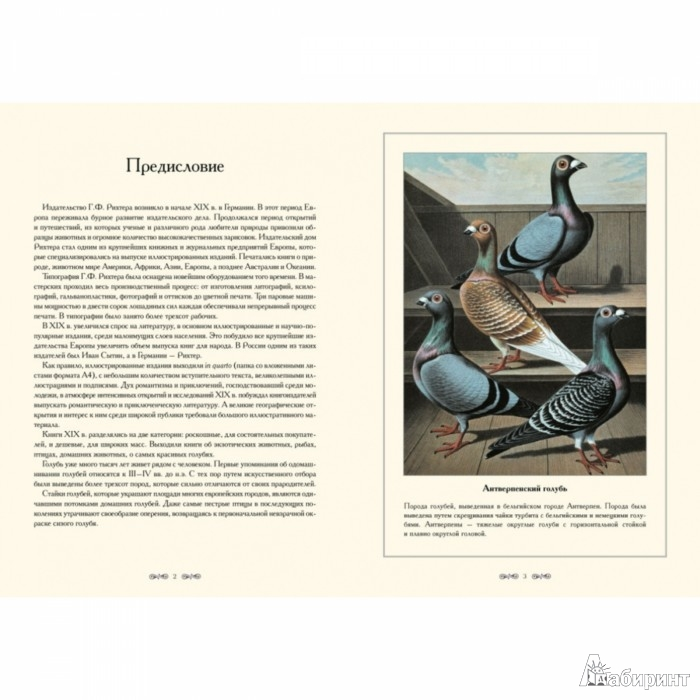 Иллюстрация 1 из 5 для Породы голубей - С. Иванов | Лабиринт - книги. Источник: Лабиринт