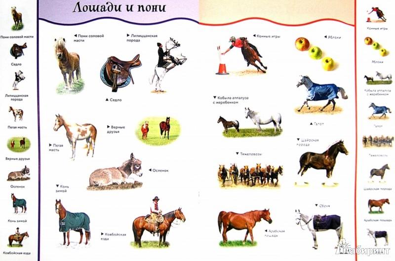 Иллюстрация 1 из 19 для Лошади и пони. Забавные наклейки | Лабиринт - книги. Источник: Лабиринт