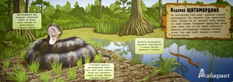Иллюстрация 1 из 4 для Энциклопедия. Кто прячется в болоте?   Лабиринт - книги. Источник: Лабиринт