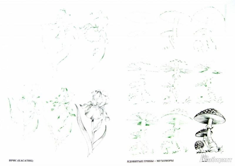 Иллюстрация 1 из 12 для Рисуем 50 цветов и деревьев - Эймис, Эймис | Лабиринт - книги. Источник: Лабиринт