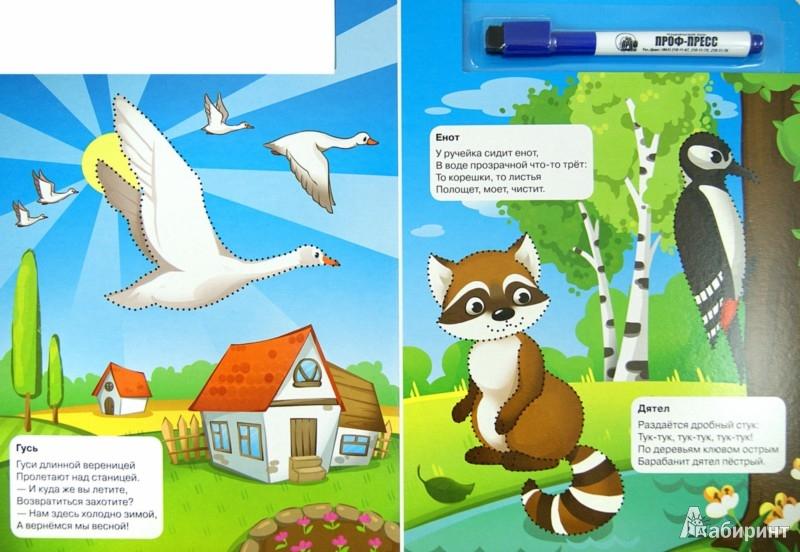Иллюстрация 1 из 6 для Животные - Наталья Майер | Лабиринт - книги. Источник: Лабиринт