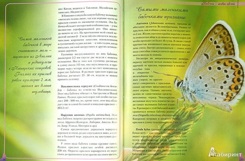 Иллюстрация 1 из 7 для Бабочки - сказочные создания - Екатерина Шейкина | Лабиринт - книги. Источник: Лабиринт