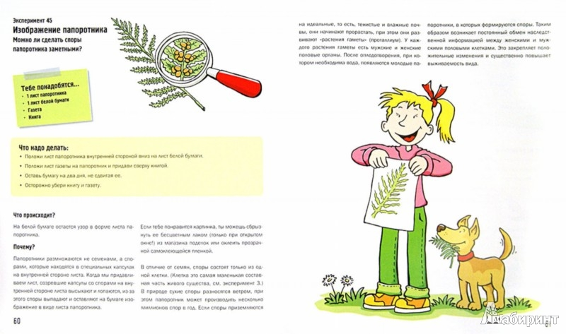 Иллюстрация 1 из 24 для 101 эксперимент с растениями - Саан Ван | Лабиринт - книги. Источник: Лабиринт