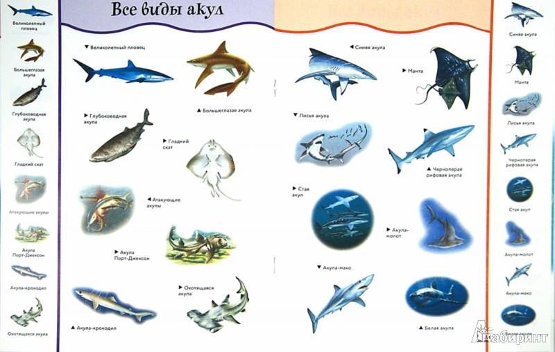 Иллюстрация 1 из 28 для Акулы | Лабиринт - книги. Источник: Лабиринт