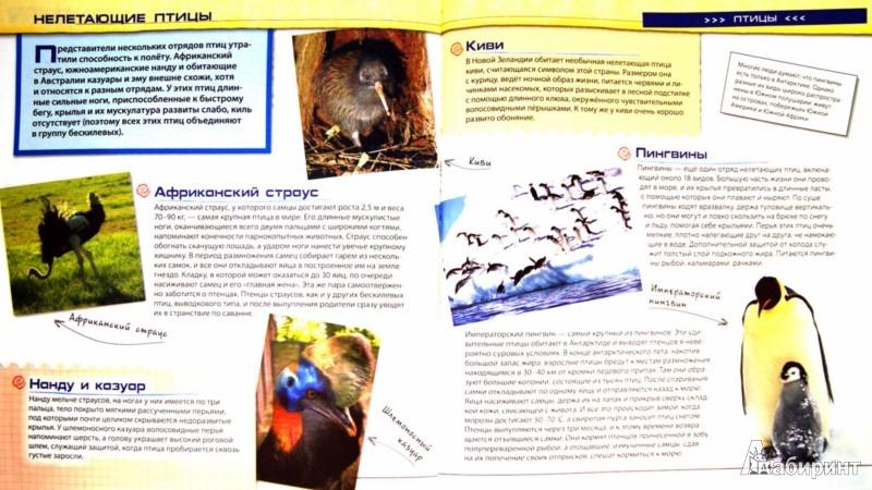 Иллюстрация 1 из 10 для Животные - Ирина Травина | Лабиринт - книги. Источник: Лабиринт