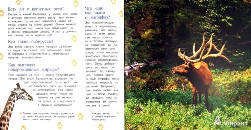 Иллюстрация 1 из 28 для Большая энциклопедия животных | Лабиринт - книги. Источник: Лабиринт