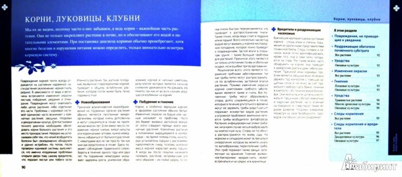 Иллюстрация 1 из 11 для Определитель болезней и вредителей растений - Томас Шустер | Лабиринт - книги. Источник: Лабиринт