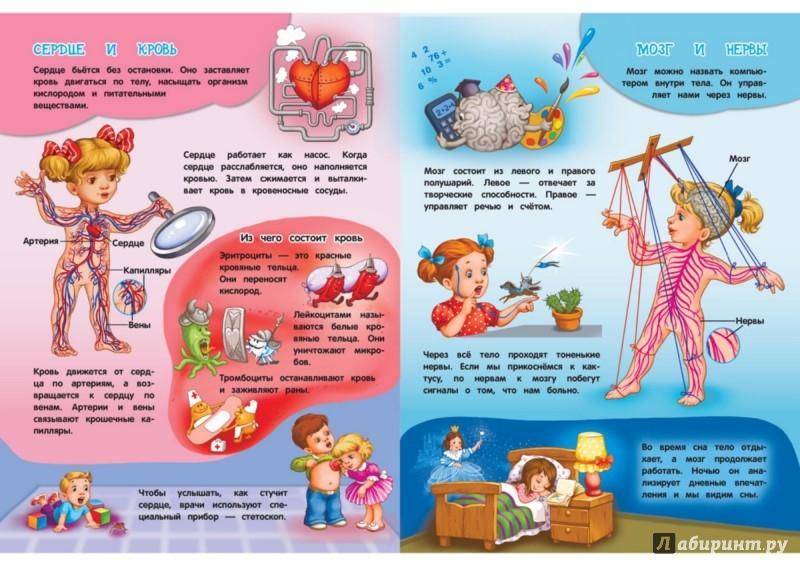 Иллюстрация 1 из 11 для Тело человека - Елизавета Малевич | Лабиринт - книги. Источник: Лабиринт